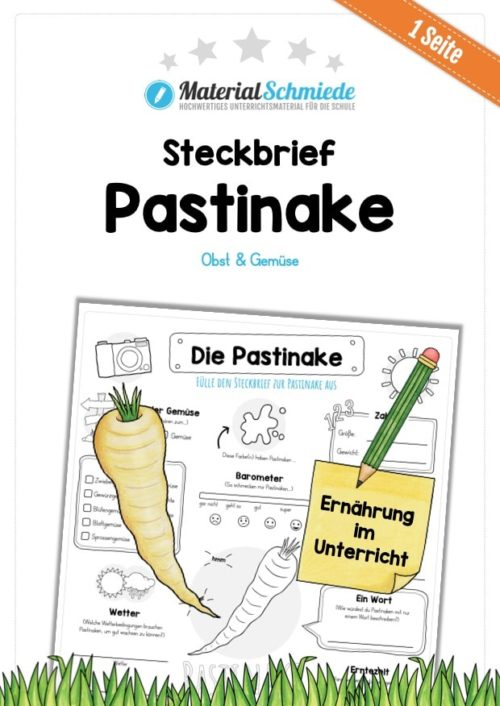 Steckbrief Pastinake