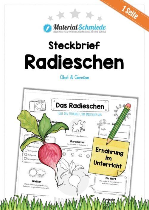 Steckbrief Radieschen