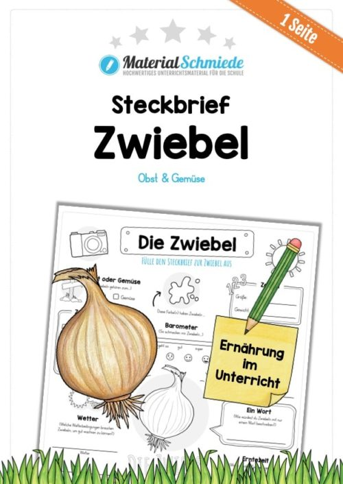 Steckbrief Zwiebel