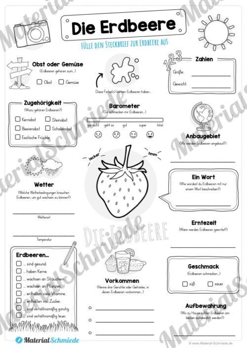 Steckbrief Erdbeere (Vorschau)