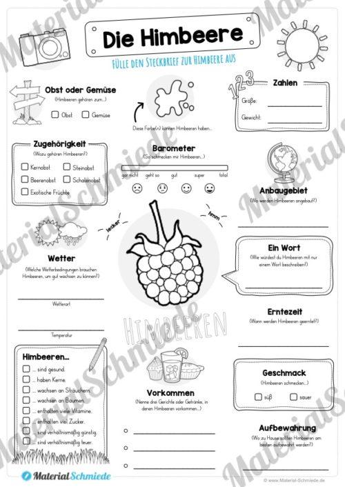 Steckbrief Himbeere (Vorschau)