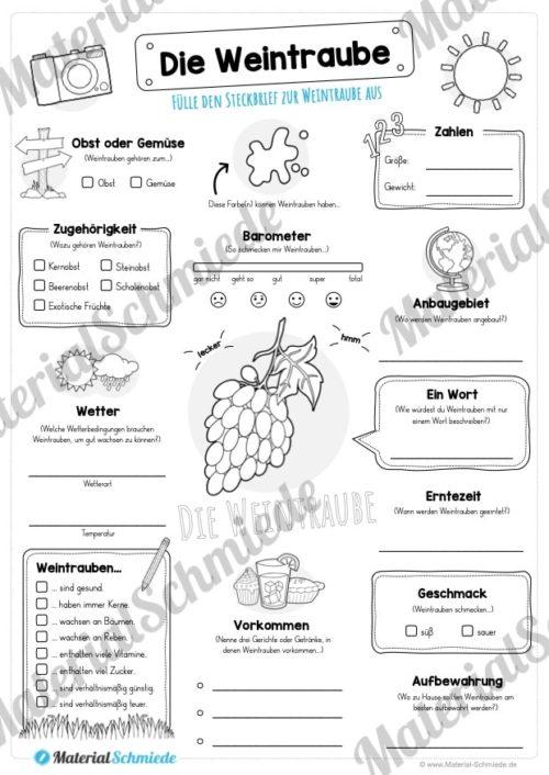 Steckbrief Weintrauben (Vorschau)