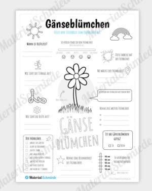 Steckbrief Gänseblümchen