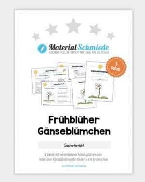 Frühblüher Gänseblümchen: Materialpaket