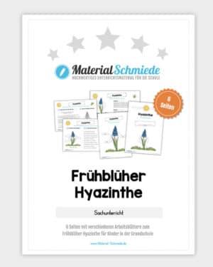 Frühblüher Hyazinthe: Materialpaket