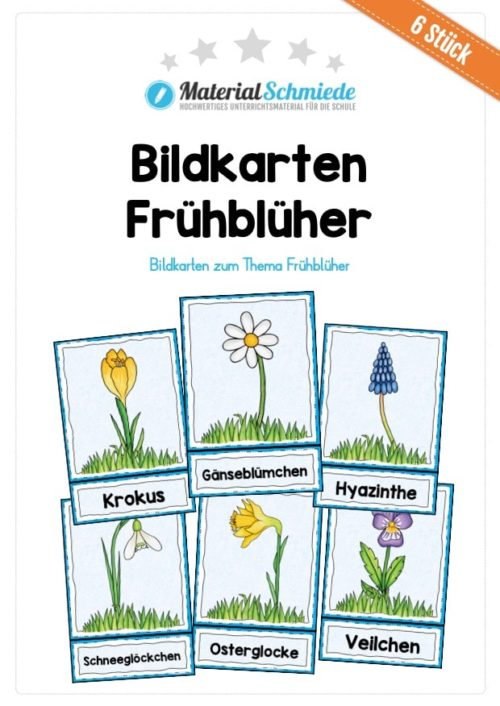 Bildkarten Frühblüher