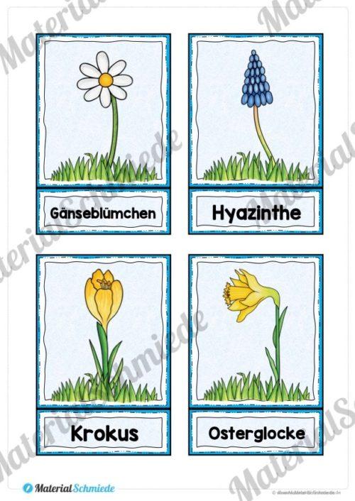 Bildkarten Frühblüher (Vorschau)