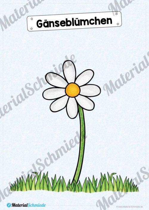 Tafelmaterial Frühblüher (Vorschau Gänseblümchen)
