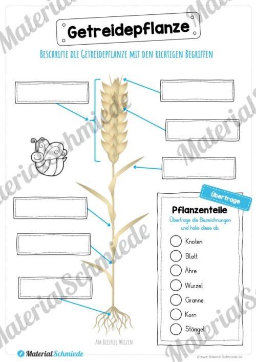 MaterialPaket: Getreide (Vorschau 01)
