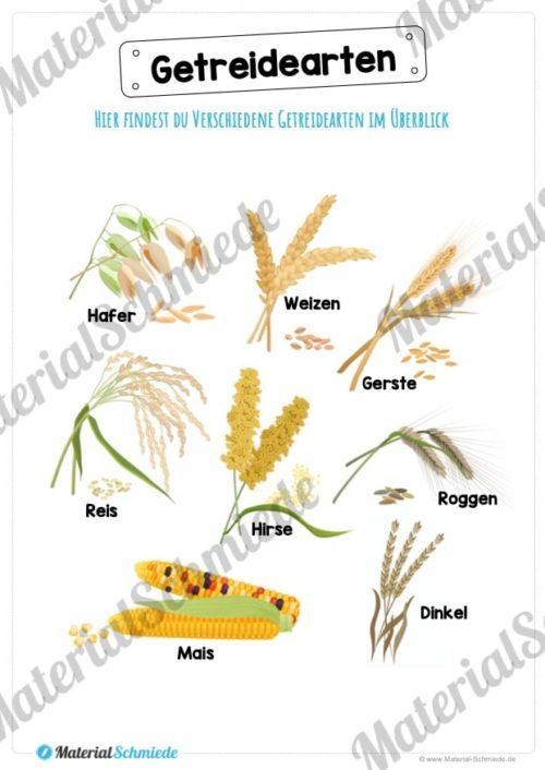 MaterialPaket: Getreide (Vorschau 03)