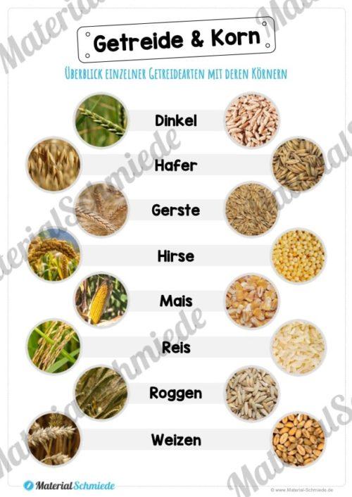 MaterialPaket: Getreide (Vorschau 04)