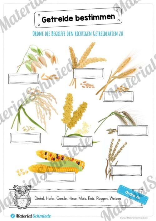 MaterialPaket: Getreide (Vorschau 06)