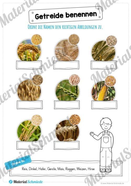 MaterialPaket: Getreide (Vorschau 08)
