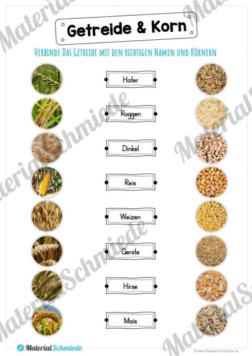 MaterialPaket: Getreide (Vorschau 10)