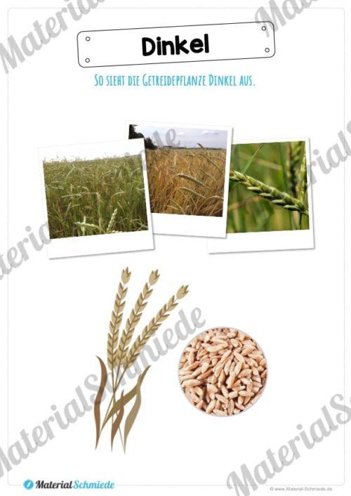 MaterialPaket: Getreide Dinkel (Vorschau 02)