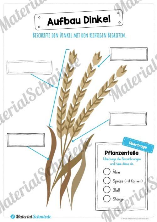 MaterialPaket: Getreide Dinkel (Vorschau 07)