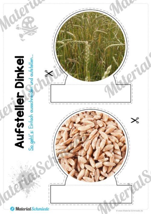MaterialPaket: Getreide Dinkel (Vorschau 10)