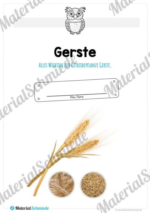 MaterialPaket: Getreide Gerste (Vorschau 01)
