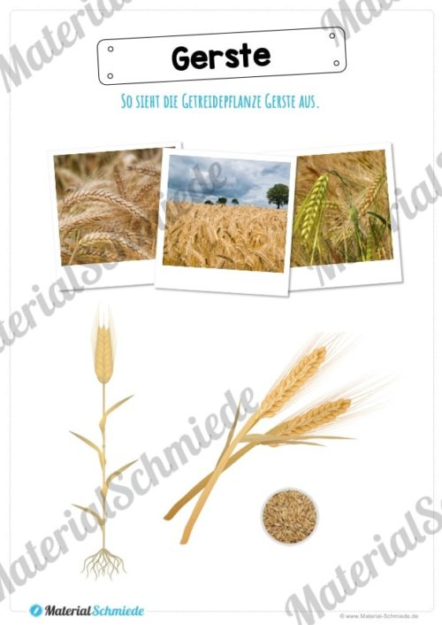 MaterialPaket: Getreide Gerste (Vorschau 02)