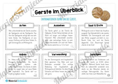 MaterialPaket: Getreide Gerste (Vorschau 03)