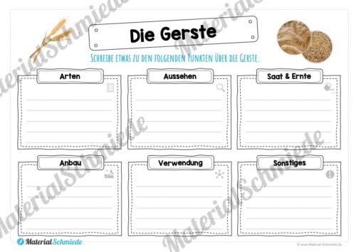 MaterialPaket: Getreide Gerste (Vorschau 04)