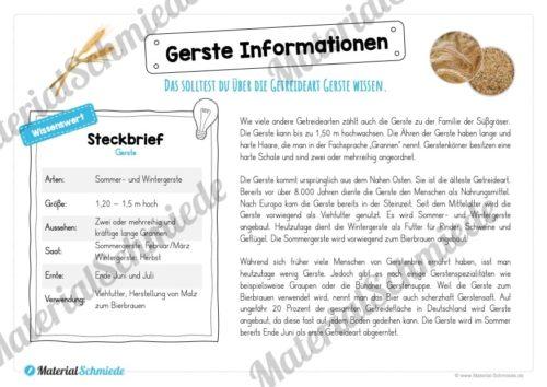 MaterialPaket: Getreide Gerste (Vorschau 05)