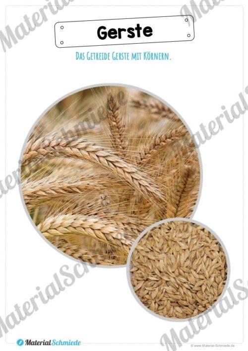 MaterialPaket: Getreide Gerste (Vorschau 08)