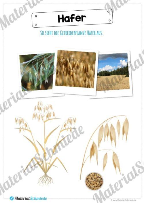 MaterialPaket: Getreide Hafer (Vorschau 02)