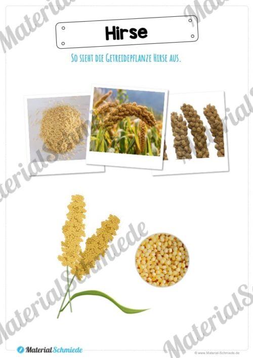MaterialPaket: Getreide Hirse (Vorschau 02)