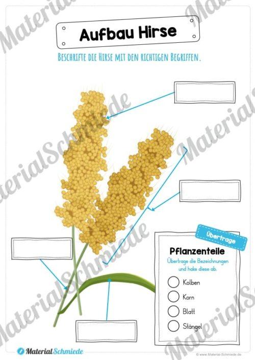 MaterialPaket: Getreide Hirse (Vorschau 07)