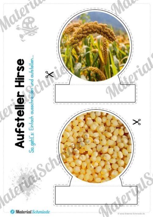 MaterialPaket: Getreide Hirse (Vorschau 09)
