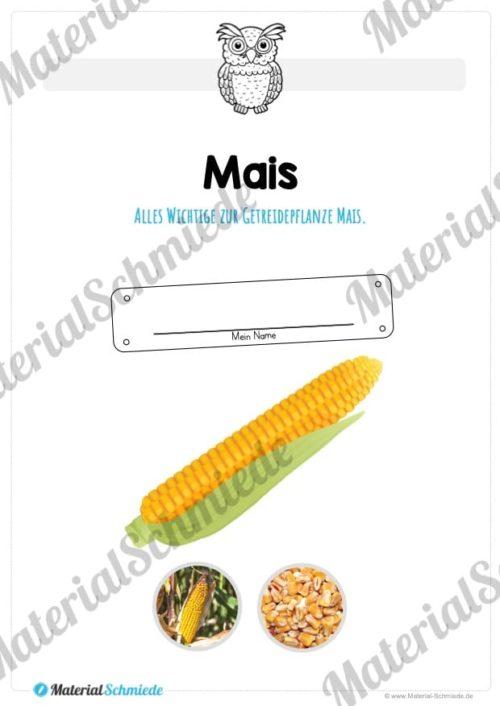 MaterialPaket: Getreide Mais (Vorschau 01)