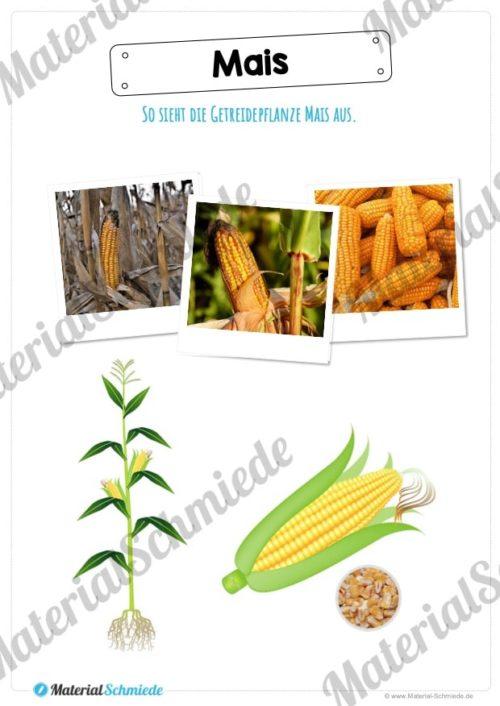 MaterialPaket: Getreide Mais (Vorschau 02)