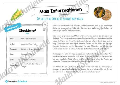 MaterialPaket: Getreide Mais (Vorschau 05)