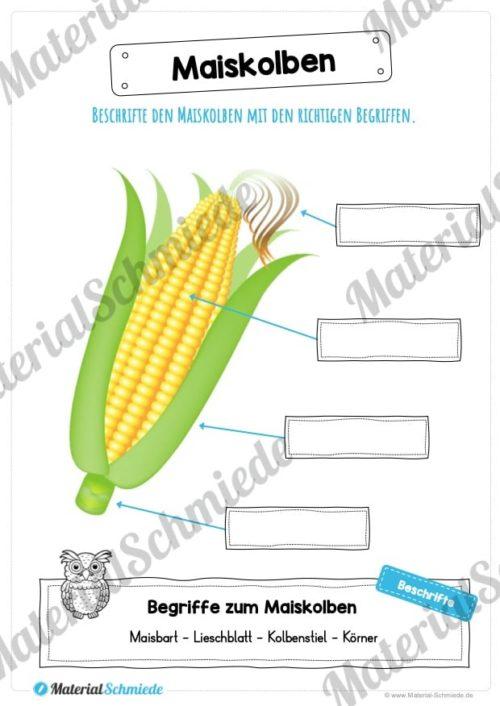 MaterialPaket: Getreide Mais (Vorschau 08)