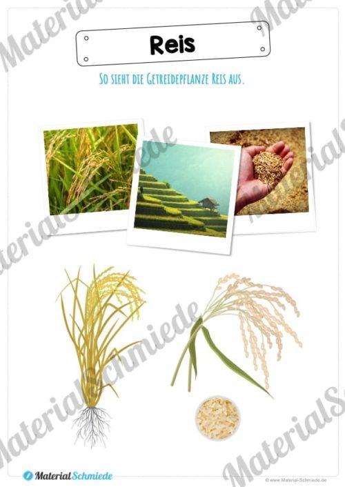 MaterialPaket: Getreide Reis (Vorschau 01)