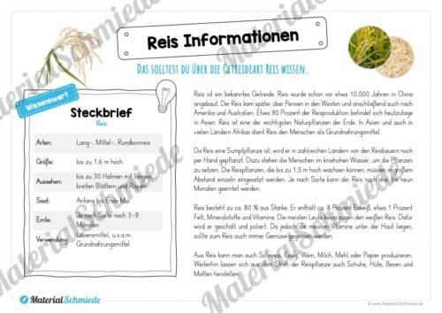 MaterialPaket: Getreide Reis (Vorschau 04)