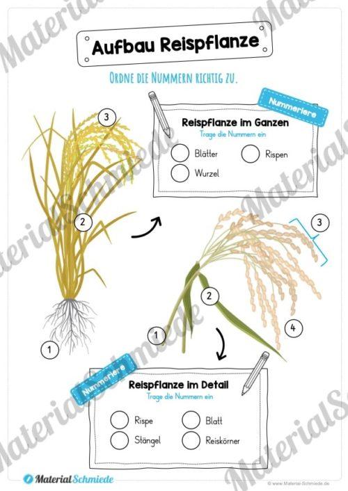 MaterialPaket: Getreide Reis (Vorschau 06)