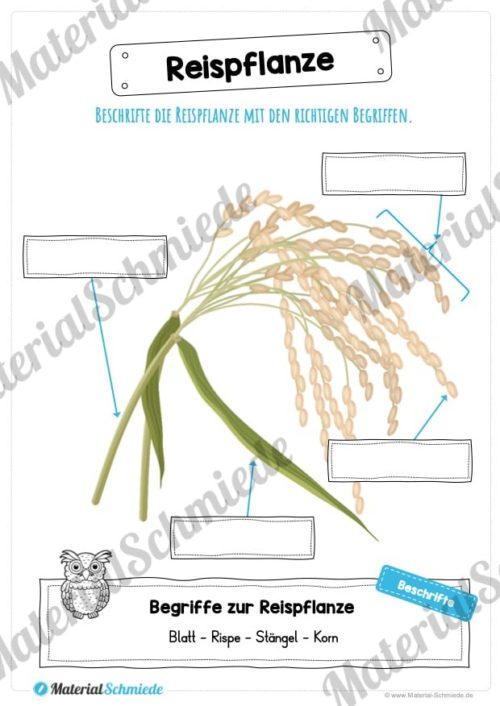 MaterialPaket: Getreide Reis (Vorschau 07)