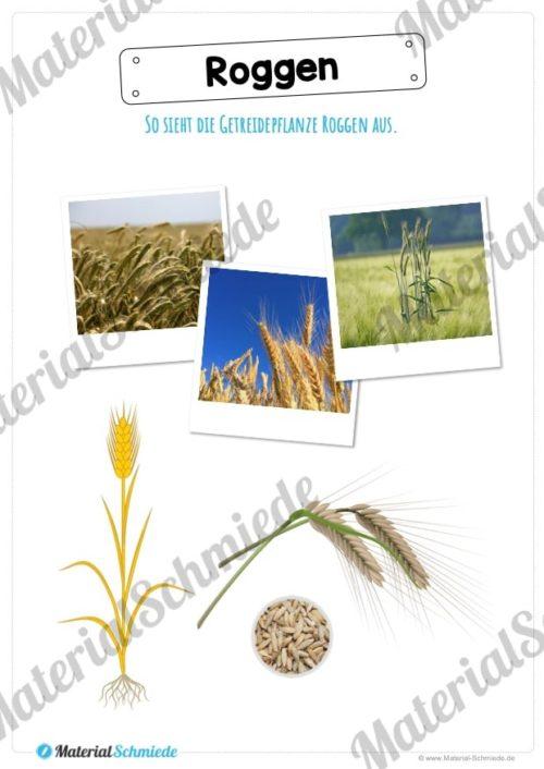 MaterialPaket: Getreide Roggen (Vorschau 02)