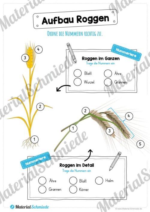 MaterialPaket: Getreide Roggen (Vorschau 06)