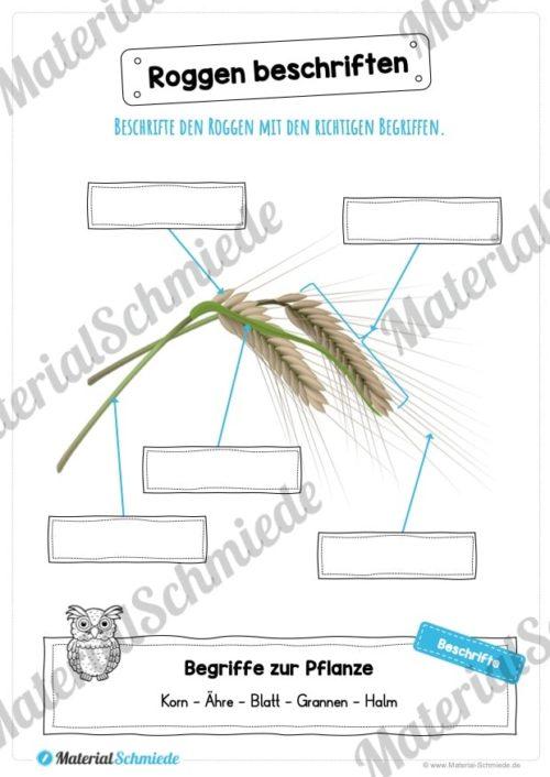 MaterialPaket: Getreide Roggen (Vorschau 07)