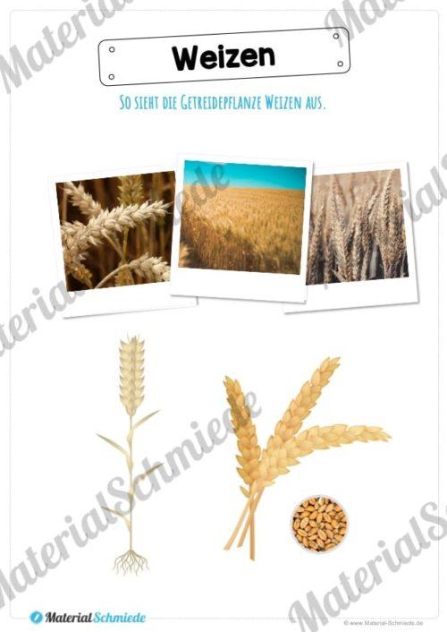 MaterialPaket: Getreide Weizen (Vorschau 02)