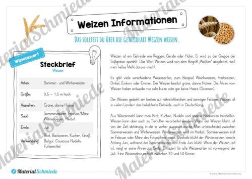 MaterialPaket: Getreide Weizen (Vorschau 05)