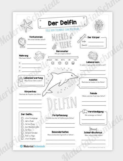 Steckbrief Delfine