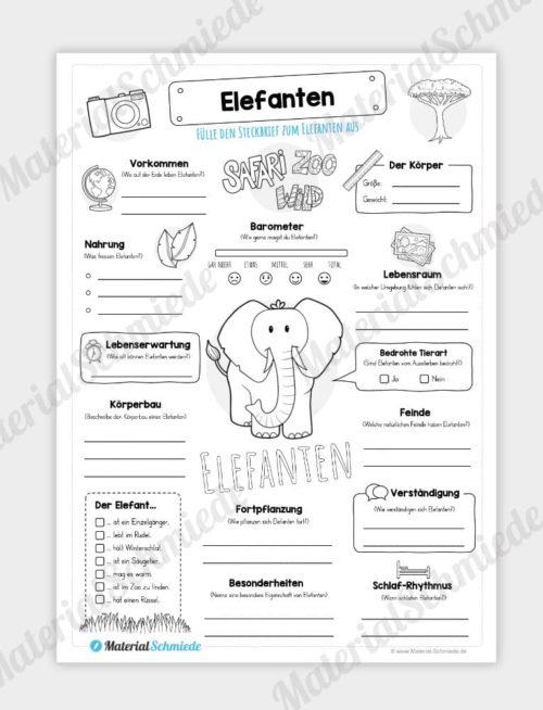 Steckbrief Elefanten