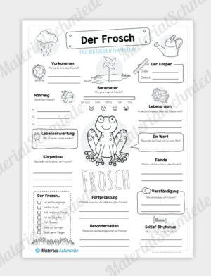 Steckbrief Frosch