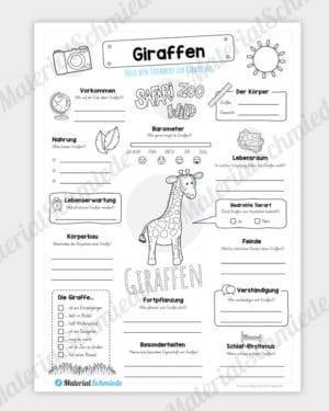 Steckbrief Giraffe