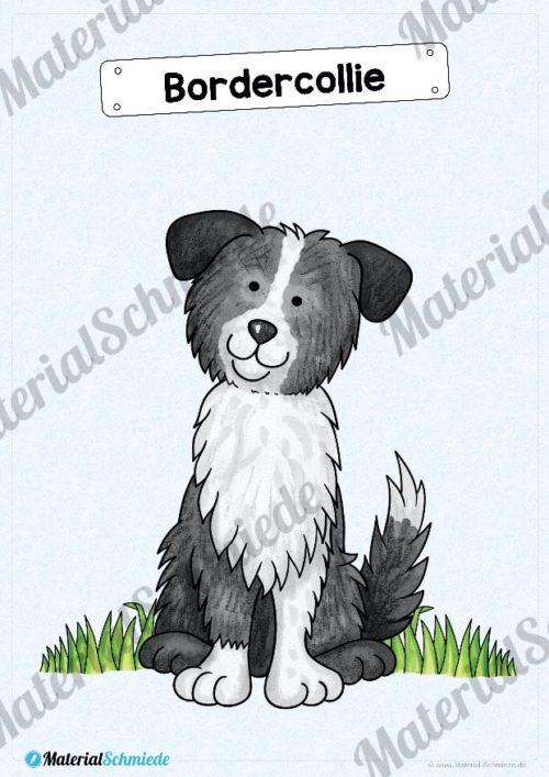 35 Flashcards Hunde & Hunderassen (Vorschau 01)