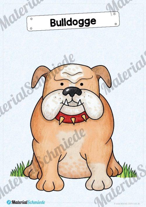 35 Flashcards Hunde & Hunderassen (Vorschau 02)